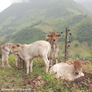 2013 Pozuzo Kolonie im peruanischen Regenwald