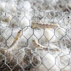 Tierische Seide oder Pima Baumwolle aus Peru