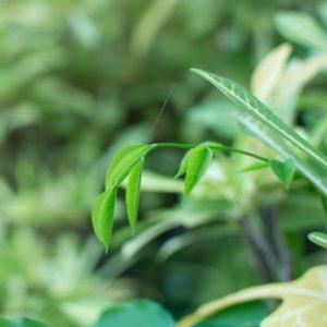LOHAS leben einen Green Lifestyle