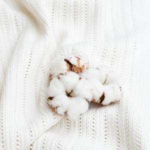 Was ist Pima Baumwolle - Das Bild zeigt eine Baumwollknospe