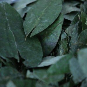 Das Foto zeigt Blätter aus dem Coca-Anbau in Peru