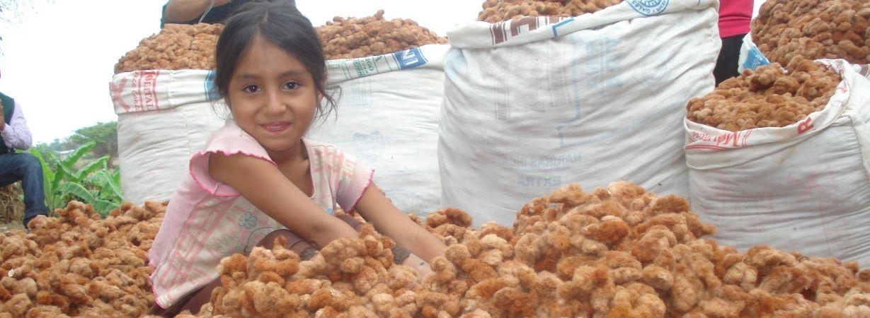 Mädchen in einem Meer aus brauner Rohbaumwolle