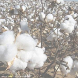 Baumwoll ist gut für die Haut_Baumwolle ist schlecht für die Umwelt (4)
