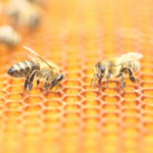 Bienenwachstuch selber machen_Bienenwachs_nichtnurmama