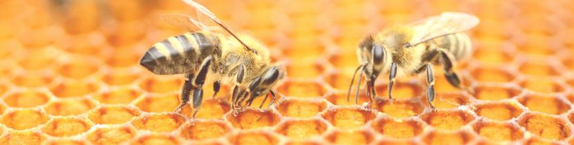 Bienenwachstuch selber machen_Bienenwachswickel_nichtnurmama (2)