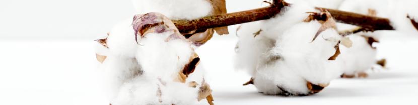 Womit selbstständig machen_Pima Baumwolle